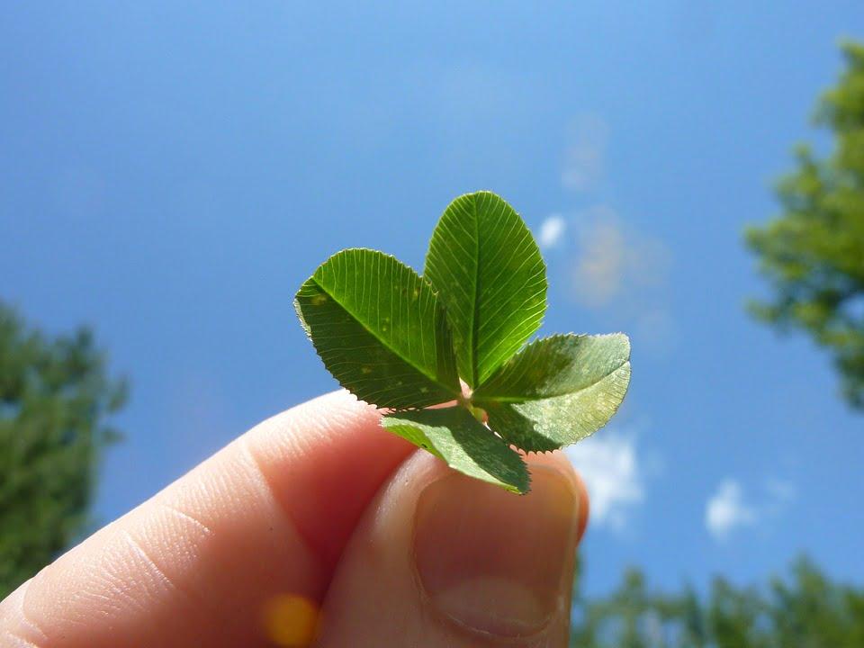 four leaf clover 19776 960 720